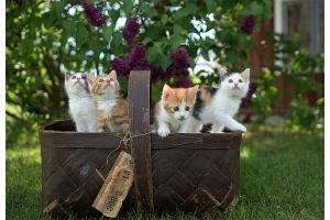 Cum sa integrezi pisica in noua casa
